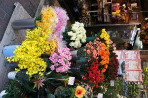 お花(花しま)